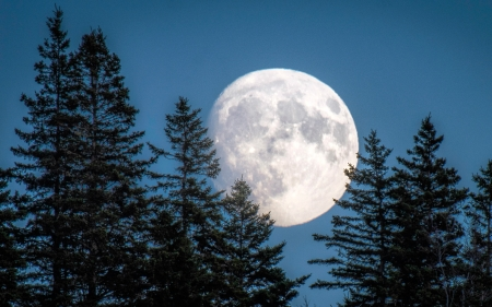 Full Moon in a Forest - supermoon, forest, nature, moon