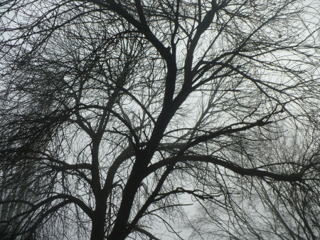 black tree - forest, tree, black, branches, branch, fog