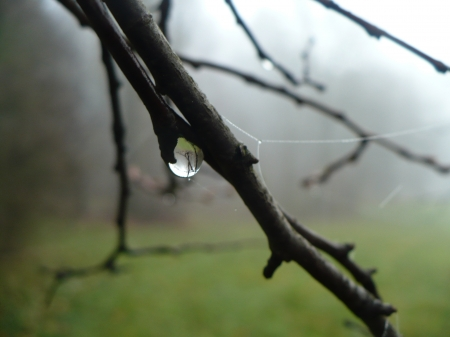 dewdrop - rain, dewdrop, branch, water, drop, fog, tree