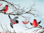 Frolicing Winter Finches