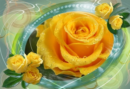 Yellow Roses - aqua, flowers, yellow, nature, drops, framed, roses
