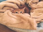 A cat in its bed