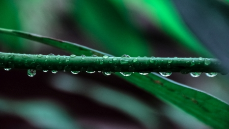 Some waterdrops on a branch - Grass, Nature, Foto, Rain, Photography, Photo, Branch, Waterpearls, Leaf, Green, After Rain, Leafs, Leaves, Snapshot, Waterdrops