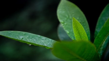 Wet Leaves - Grass, Nature, Foto, Rain, Photography, Photo, Wet, Waterpearls, Leaf, Green, After Rain, Leafs, Leaves, Snapshot, Waterdrops