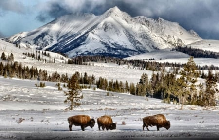 Yellowstone Winter Scene Fc Other Animals Background