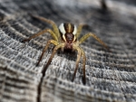 Spider Close-up