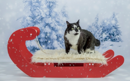 Cat - winter, blue, animal, white, pisica, red, sleigh, cat, tree