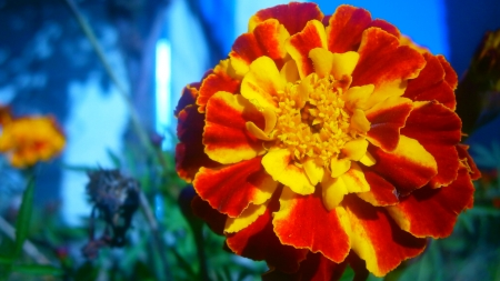 Firey flower - photo, red, plant, awsome, beautiful, preety, nice, cool, flower, nature