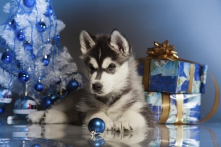 Husky Christmas Puppy.Christmas Puppy Dogs Animals Background Wallpapers On