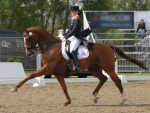 Dressage Performance F