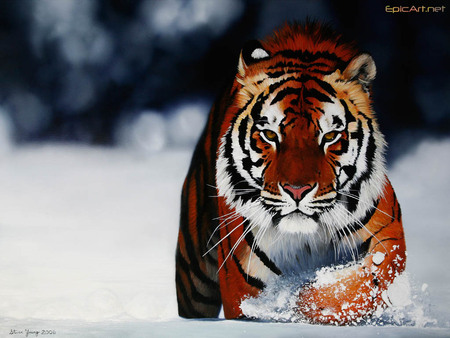 Tigre, tiger - wonderful, liutas, tigre