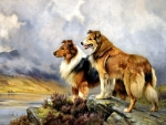 Collies on the Lake FC