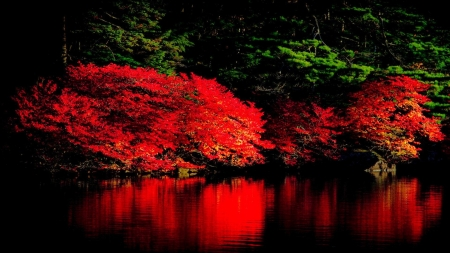 Glowing Forest at Night - glow, night, forest, reflection, nature, autumn, lake