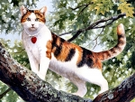 Calico Cat in a Tree F