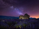 Lavender Field under Starry Sky