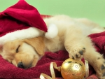 christmas puppy sleeping