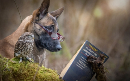 Friends - german shepherd, dog, animal, bird, caine, book, owl, cute, pasare, glasses