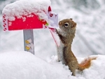 Squirrel sends letter