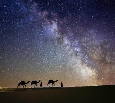 Milky Way and the desert - amazing, desert, camel, sky
