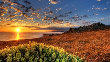 Summer Sunset - grass, sunlight, shine, sunset, clouds, mirrored, beach, sundown, rays, summer, flowers, nature, reflection