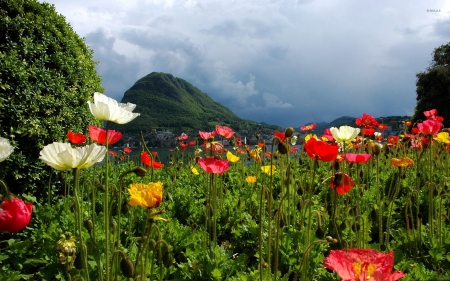 Lovely Poppies Field by the Lake - poppies, flowers, field, nature, mountain, lake