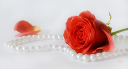 ♥ - flower, red, pearl, rose
