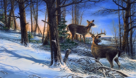 Night Watch - white-tailed deer, love four seasons, attractions in dreams, xmas and new year, deer, winter, paintings, snow, nature, forests, animals, night