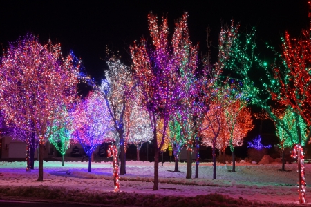Magical Night of Lights - Christmas, Nights, Trees, Holidays, Lights, Nature, Winter