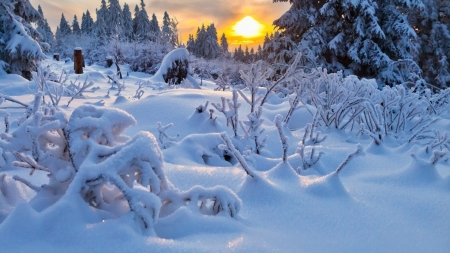 Amazing Winter Landscape - landscape, ice, winter, sunset, forest, trees, nature