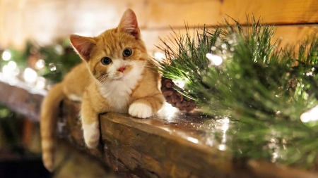 christmas kitty - christmas, cats, trouble, kitty