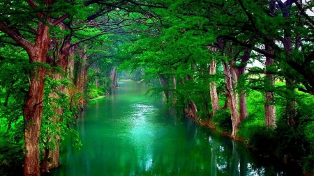 river in the forest - fun, cool, forest, river, nature