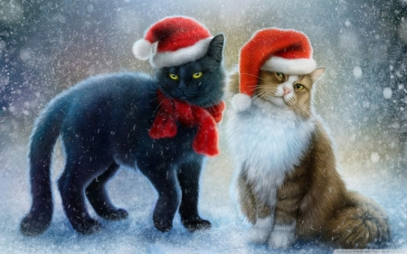 Christmas Cats! - nature, christmas, cats, animals
