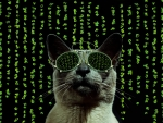 Cat in Matrix style