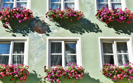 Windows and Flowers - house, flowers, sun, windows