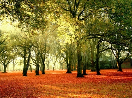 ♥ - forest, autumn, nature, trees