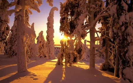 Snowy Sunset - landscape, snow, winter, sunset, trees, nature
