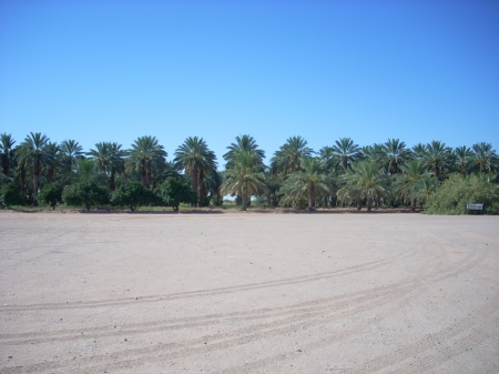 The Palms - deserts, palms, palm trees, figs