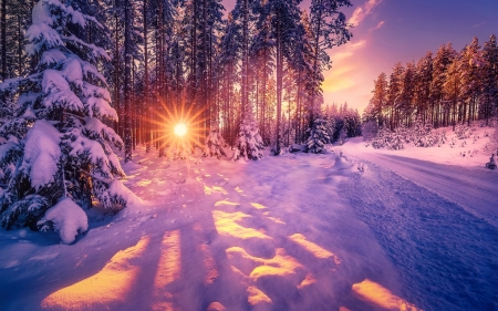 Winter sun - glow, sun, rays, snow, beautiful, trees, winter, landscape