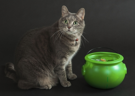 Some luck today? - green, day, pot, funny, cat, st patrick, animal, pisica