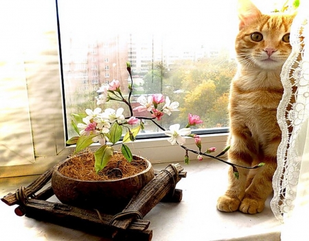 Shy cat - window, shy, kitty, interior, cat, cute, flowers, pink, animals, natural