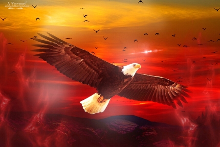 Eagle's Flight - red, free, flight, eagle, beautiful, sunset, magnificant, digital art, sky, soaring