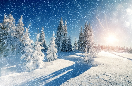 winter scene winter nature background wallpapers on desktop