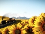 Train Through Sunflower Field