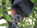 Sleepy Bat
