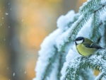 Little Bird in Snow