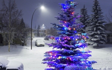 Christmas and New Year - Christmas, holidays, Christmas Tree, love four seasons, attractions in dreams, xmas and new year, winter, snow, nature