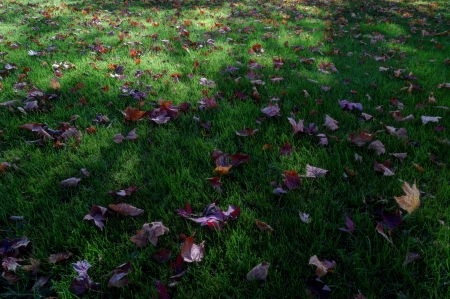 I Miss This... - grass, leaves, fall, shadows
