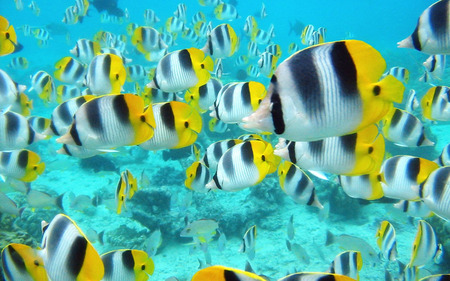 Tropical Fish - blue water, underwater, animals, tropical fish, aqua, water, fish