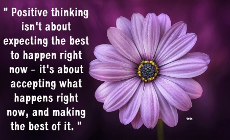 Positive thinking - thoughts, quotes, macro, flower, words, nature