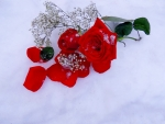 Roses on the snow